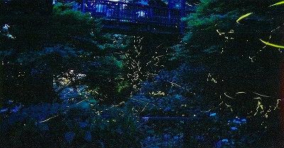 S-出会橋ほたる4
